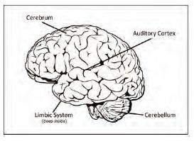 OTR-brain-Sept2019-LOGIQ3